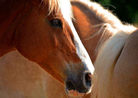 Close up horse head in front of other horses Stock Photo