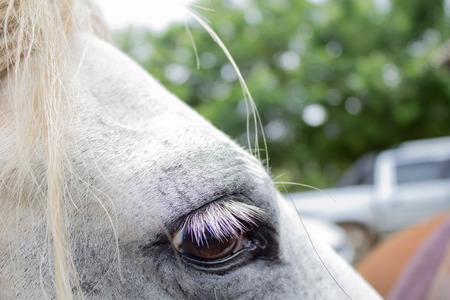 Close up of white horse eye on sunny day