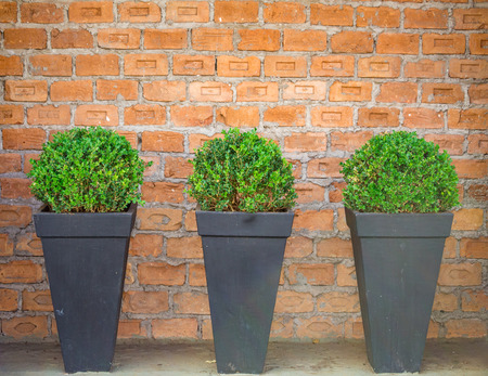 Brick wall in the background, decorated with plants vases. Stock Photo