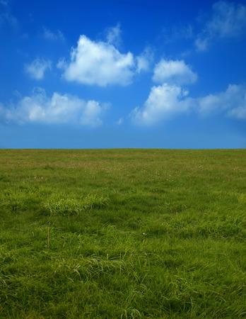 field and sky: El campo, cielo, verano.