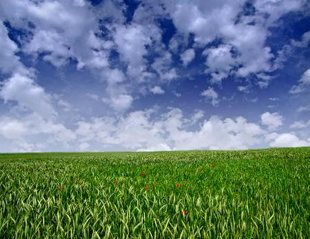 field and sky: Field, sky, summer. Foto de archivo