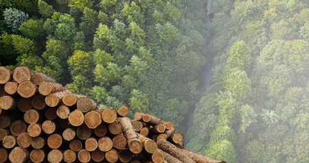 Industry for the processing and sale of wood Фото со стока