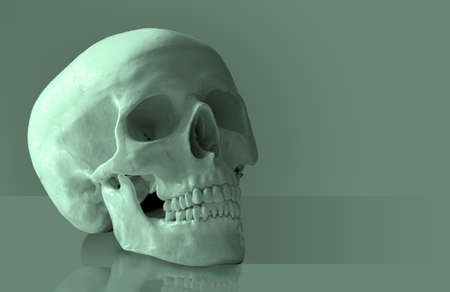 artificial teeth: Artificial human skull. Stock Photo