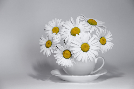 Chamomile flowers in a cup on a colorless background.