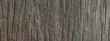The texture of the bark of an old tree for the site banner. Imagens