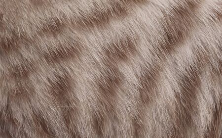 The hair of an animal domestic cat. Imagens