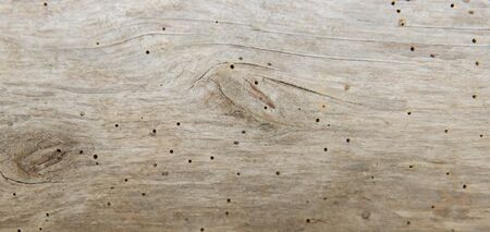 Old tree beetles eaten by a wood board. Imagens