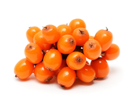 argousier: Sea buckthorn berries branch isolated on white background