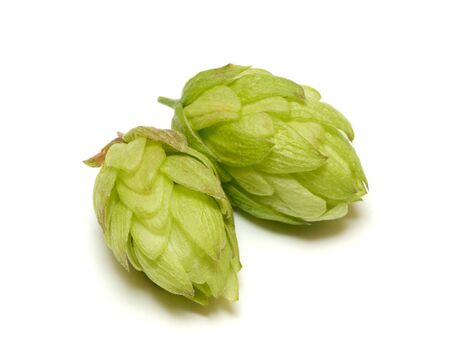 bitterness: Hop cone isolated on white background
