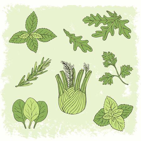 Hand drawn herb set with mint, spinach, basil, parsley. Vector illustration. Ilustração