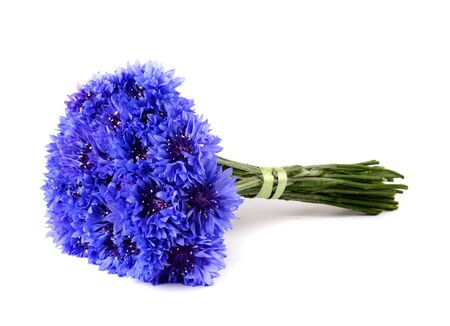 Blue cornflower bouquet isolated on white background Reklamní fotografie