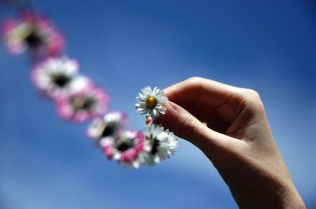 female hand holding a chain of daisies