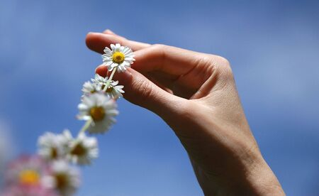 chain of daisies against a clear blue summer sky Stock Photo - 2951141