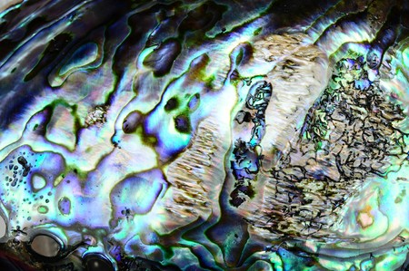 beautiful background of a colorful paua shell Stock Photo
