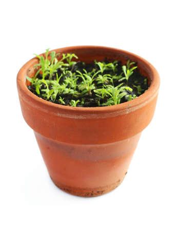 Small pot with plant photo