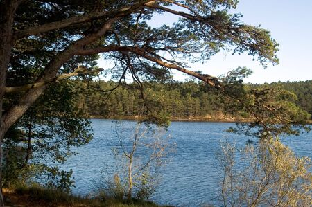 ness river: lake from a forest Stock Photo