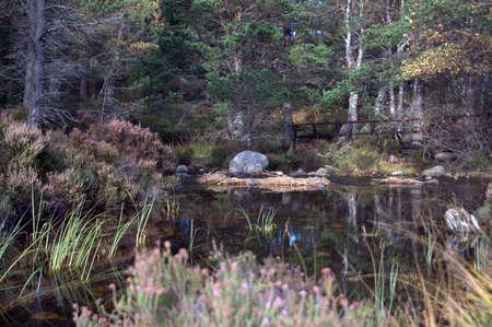 ness river: pond scene Stock Photo