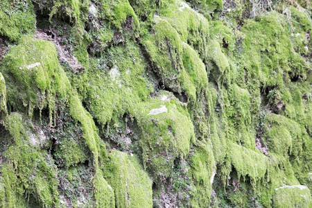stepping stone: Green moss