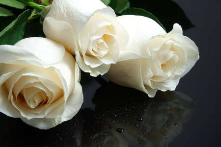 three white roses with waterdrops on black background Stock Photo - 3064393
