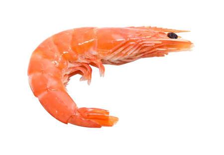 big shrimp isolated on white background - giant prawn Stock Photo - 4468809