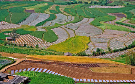 cropland: Chinese Cropland