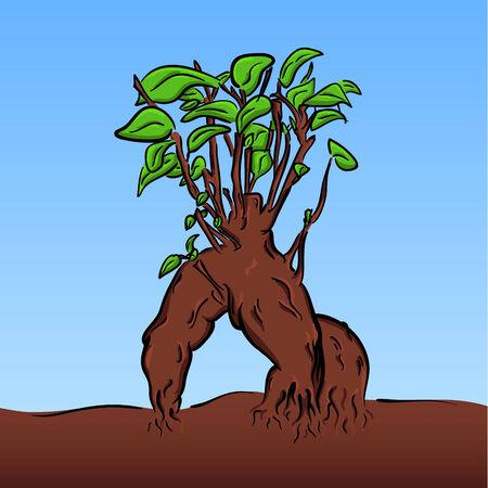 vector colored cartoon bonsai of ficus benjamin Vector