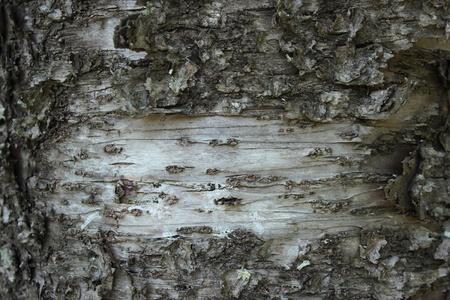 Bark of Tree photo