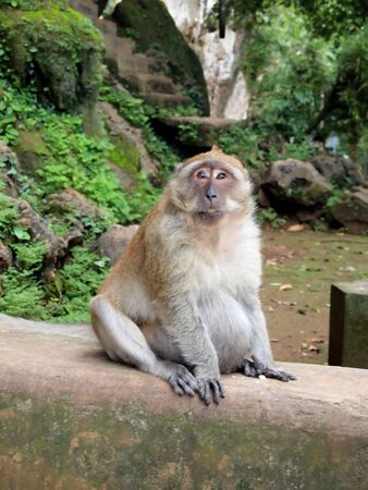 Monkey is sitting on the wall looking me in Phuket, Thailand  photo