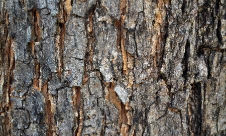 fundo de madeira madeira natureza textura Banco de Imagens