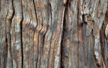 Real wood background hardwood nature texture