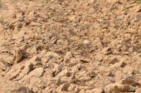 O solo seco em Esarn Tail�ndia em mar�o Banco de Imagens