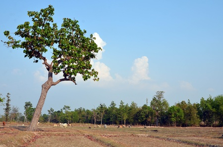 A barren cow pasture in thailand Stock Photo