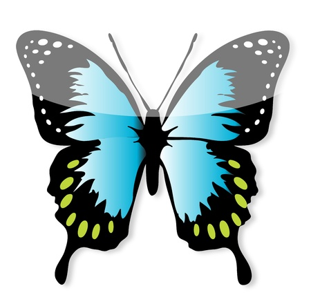 Blue and Black butterfly line art Vector
