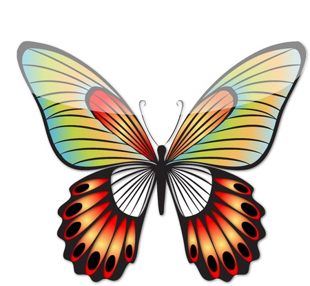 hot full color butterfly line art