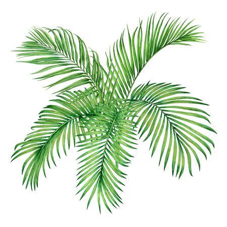 Dipinto ad acquerello albero di cocco, foglia di palma, congedo verde isolato su priorità bassa bianca. Foglia esotica dell'albero tropicale dell'illustrazione dipinta a mano dell'acquerello per carta da parati vintage modello di stile giungla Hawaii.
