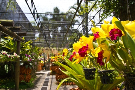 orchids garden , at Pattaya , photo