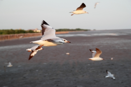 avoids: this picture taken sea gull that avoids the cold wind from other continent comes to are formed at Samootprakarn seaside ,