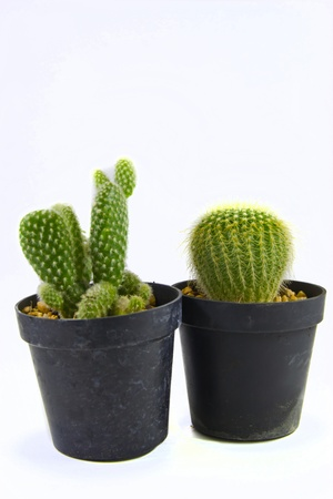 very small cactus likes to grow keep decorate a room because , take care easy and must not take care very , photo