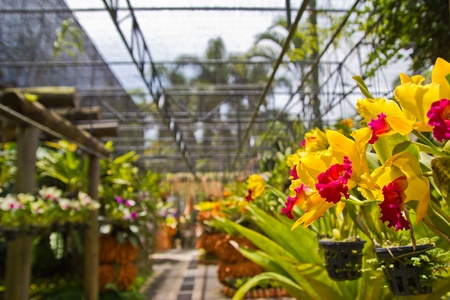 orchids garden in Pattaya