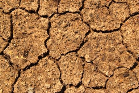 dry earth texture Stock Photo - 15555190