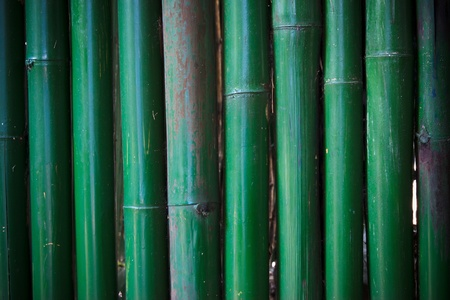 bamboo fence , at Thai photo