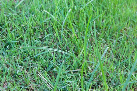 beautiful green grass texture photo