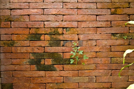 background of brick wall texture Stock Photo - 17170157