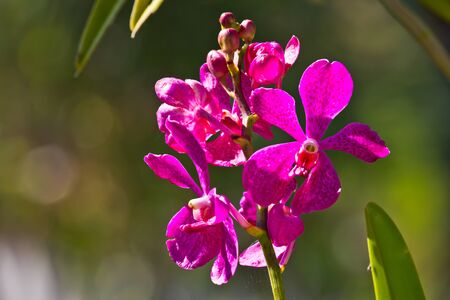 streaked: pink streaked orchid flower