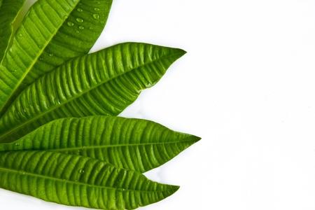 viewfinderchallenge3: leaf texture