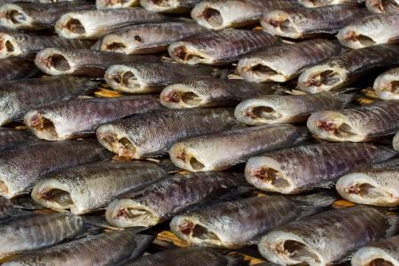 gourami: drying snakeskin gourami fishes