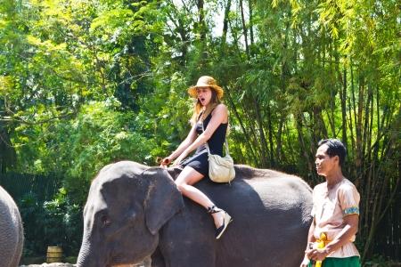 east riding: bANGKOK, THAILAND - oct 20: a tourist rides the elephant in a zoo opens safari world