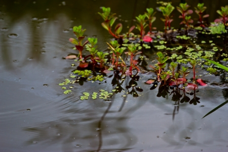 aquatic Plants Stock Photo - 19725495