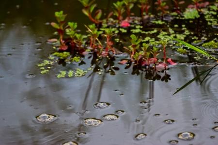 aquatic Plants Stock Photo - 19725493