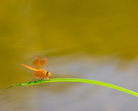 Aquatic Plants and Dragonfly photo